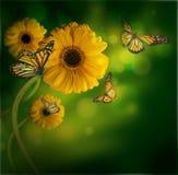 Fondo floral, gerbery Imagen de archivo