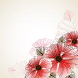 Fondo floral hermoso de la anémona Foto de archivo