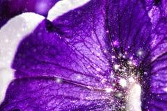 Fondo floral hermoso del abctract Imagen de archivo
