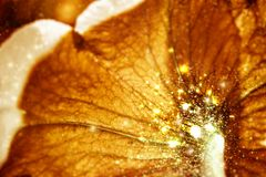 Fondo floral hermoso del abctract Fotos de archivo