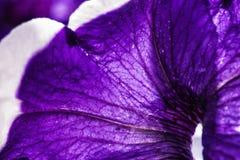 Fondo floral hermoso del abctract Foto de archivo libre de regalías
