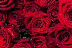 Fondo floral hermoso del fondo… con las flores coloridas El manojo de rosas rojas vivas grandes con agua cae en sus pétalos Visió fotos de archivo