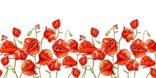 Fondo floral inconsútil con la amapola roja Imágenes de archivo libres de regalías