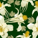 Fondo floral inconsútil con las flores blancas Foto de archivo libre de regalías