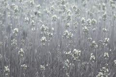 Fondo floral monocromático Imagenes de archivo