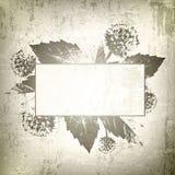 Fondo floral natural del marco Fotos de archivo libres de regalías