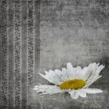 Fondo floral negro de Grunge Foto de archivo