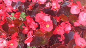 Fondo floral Rojo Imagen de archivo
