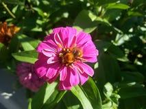 Fondo floral romántico Flor Primer de Rose en verde Foto de archivo libre de regalías