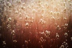 Fondo floral soñador Imagen de archivo libre de regalías