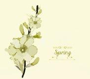 Fondo floral, tema de la primavera, tarjeta de felicitación Foto de archivo libre de regalías