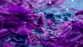 Fondo floral violeta del extracto, p?talos de la flor en agua metrajes