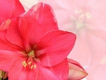 Fondo floreale Fotografia Stock