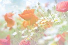 Fondo floreale astratto con i papaveri Fotografia Stock Libera da Diritti