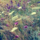 Fondo floreale astratto nello stile d'annata. Fiori selvaggi Fotografie Stock