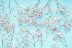 Fondo floreale blu-chiaro con i fiori bianchi del Gypsophila modello di fiori del Babys-respiro sul blu pastello fotografie stock libere da diritti