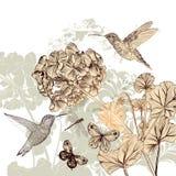 Fondo floreale con i fiori, gli uccelli e le farfalle Fotografia Stock Libera da Diritti