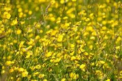 Fondo floreale con i wildflowers e l'erba fotografia stock