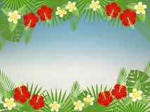 Fondo floreale con spazio per testo Fiori e foglie tropicali - ibisco, palma, Monstera, plumeria Fotografia Stock