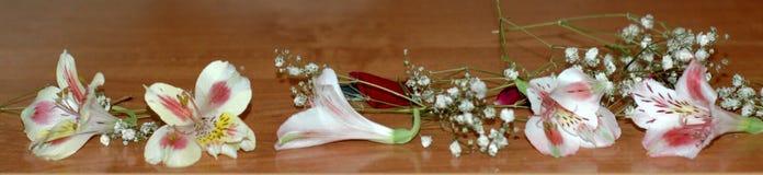 Fondo floreale del confine della natura-un dei fiori nel Alstroemeria Fotografia Stock
