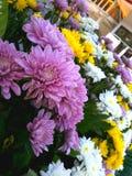 Fondo floreale del fiore Garden fotografie stock