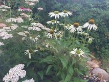 Fondo floreale del fiore Garden immagine stock libera da diritti