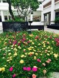 Fondo floreale del fiore Garden fotografia stock libera da diritti