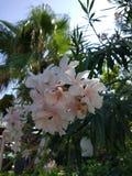 Fondo floreale del fiore Garden Immagine Stock