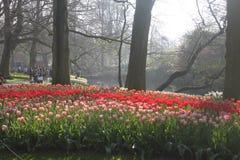 Fondo floreale del fiore Garden Immagini Stock Libere da Diritti
