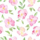 Fondo floreale dell'acquerello con le rose selvatiche rosa Fotografia Stock Libera da Diritti