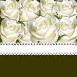 Fondo floreale della rosa di bianco con il nastro Fotografia Stock
