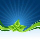 Fondo floreale di Eco Immagini Stock