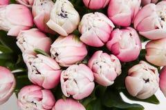 Fondo floreale di vista superiore dei tulipani ottimistici leggeri Fotografia Stock Libera da Diritti