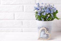 Fondo floreale - i nontiscordardime o il miosotis blu fiorisce dentro immagine stock
