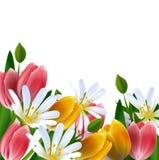 Fondo floreale. Margherite e tulipani. Fotografia Stock