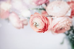 Fondo floreale pastello con i fiori graziosi Fotografia Stock