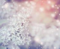 Fondo floreale romantico della natura con la fioritura lilla leggera fotografie stock