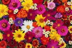 Fondo floreale, vista superiore La struttura del flo differente del giardino fotografia stock libera da diritti