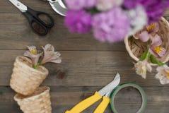 Fondo floristico degli strumenti Fiori rosa del garofano di Alstromeria su fondo di legno con gli strumenti floristici del giardi Immagini Stock