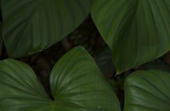 Fondo a forma di delle foglie verdi Immagine Stock