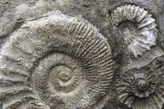 Fondo fossile Fotografie Stock Libere da Diritti
