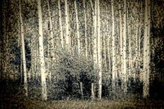 Fondo frecuentado del horror de maderas Imagenes de archivo
