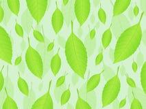 Fondo fresco 3 de las hojas Imagen de archivo