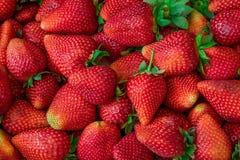 Fondo fresco de la fresa Fruta fresca Foto de archivo libre de regalías