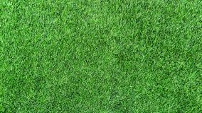 Fondo fresco de la hierba verde Imagen de archivo libre de regalías