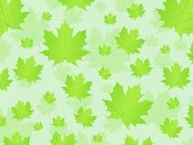 Fondo fresco de las hojas Fotografía de archivo