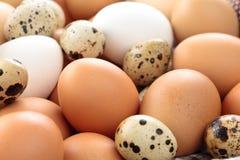 Fondo fresco de los huevos Imagen de archivo