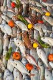 Fondo fresco de los mariscos Imagen de archivo