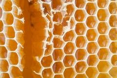 Fondo fresco de los panales de la abeja de la miel Imagenes de archivo