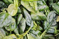 Fondo fresco degli spinaci Fotografia Stock Libera da Diritti